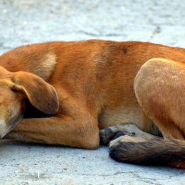 Dog Reportedly Left in Hot Car for Eight Hours Deserves Justice