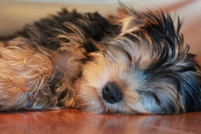 Punish Man Who Allegedly Stabbed and Disemboweled Dog