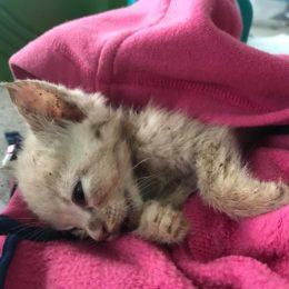 Kitten Buried Alive Deserves Justice