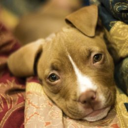 Puppy Allegedly Beaten With Belt Deserves Justice