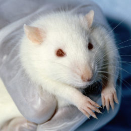 Ban Cosmetic Animal Testing in Canada