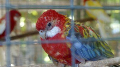 End the Abuse of Aquarium Animals at Popular Tourist Spot