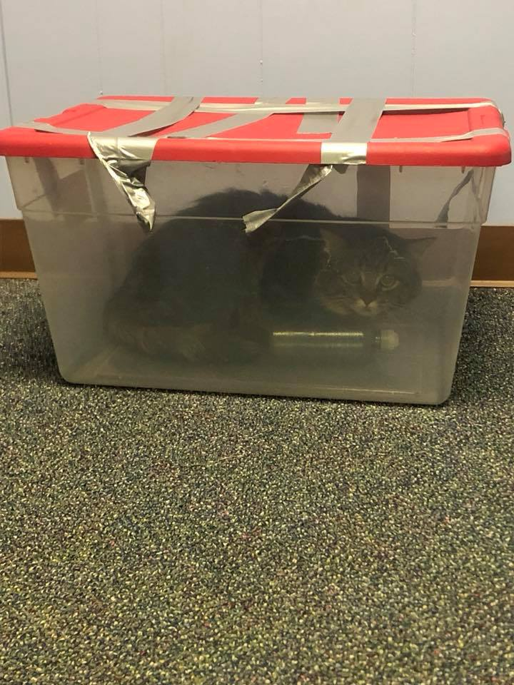Cat Entombed in Duct-Taped Plastic Bin Deserves Justice