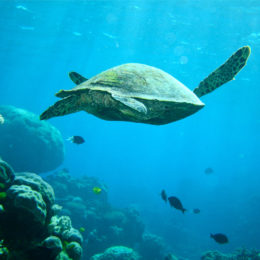 Stop Fatal Poisoning of Great Barrier Reef Turtles