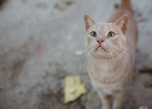 Punish Alleged Craigslist Cat Killer - ForceChange