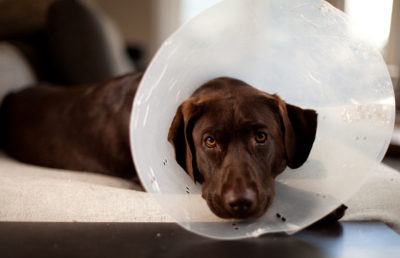 Sad dog wearing cone